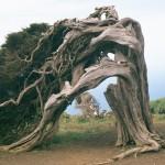 Visita natural a la fabulosa isla de El Hierro. Saborea el encanto de las Islas Canarias