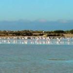 Bosque y playa | Ecoturismo en la Bahía de Cádiz
