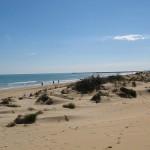 Turismo de sol y playa en Alicante: Guardamar del Segura